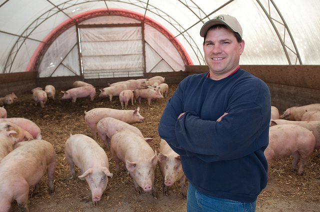 Lower Cost Method For Feeding Hogs Until They Are Heavy Enough To Take Market Hoop Barns Use Straw Or Corn Stalks As Deep Bedding Absorb Manure